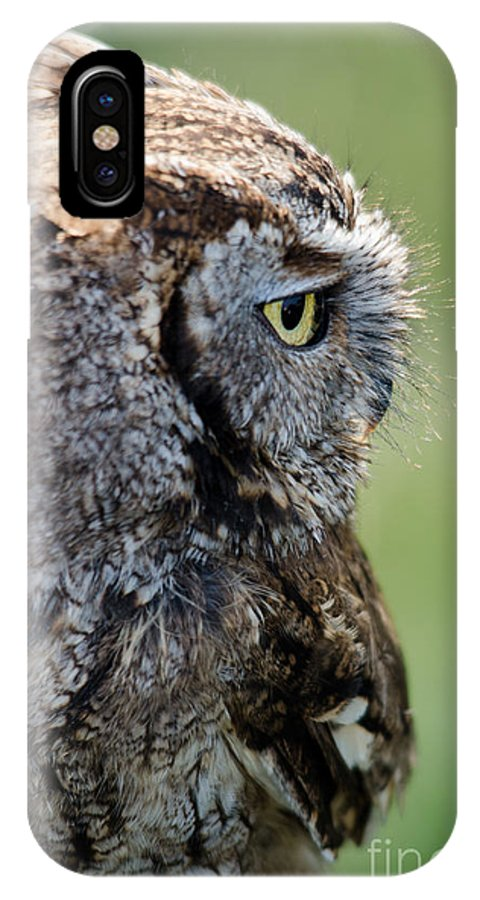 Owl IPhone X Case featuring the photograph Western Screech Owl by Steev Stamford