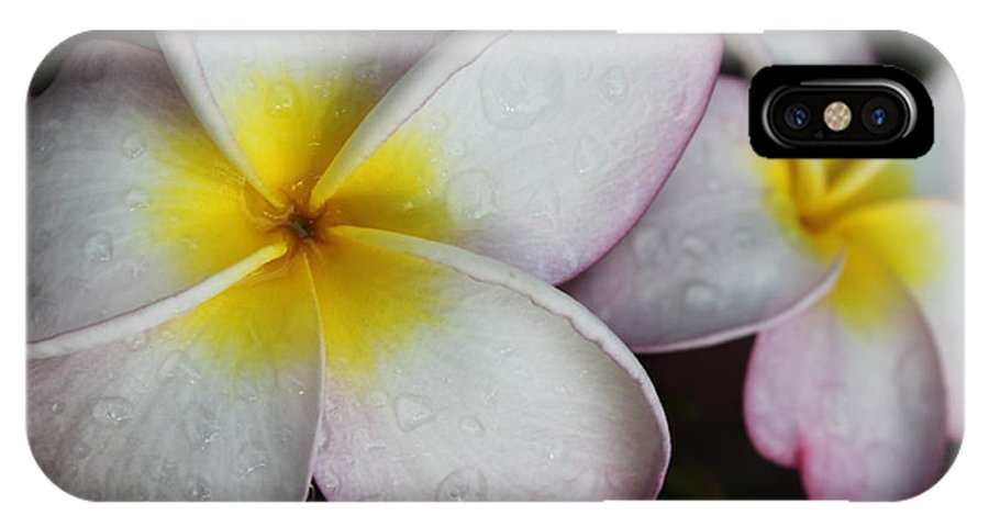 Flower IPhone X Case featuring the photograph Wet Petals by Lauri Novak