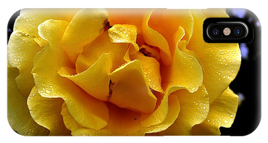 Clay IPhone X Case featuring the photograph Wet Yellow Rose by Clayton Bruster