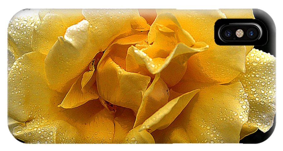 Clay IPhone X Case featuring the photograph Wet Yellow Rose II by Clayton Bruster