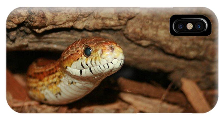 Snake IPhone X Case featuring the photograph Whaaaaatz Up by David Dunham