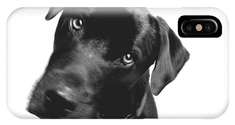 Labrador IPhone X Case featuring the photograph What by Amanda Barcon
