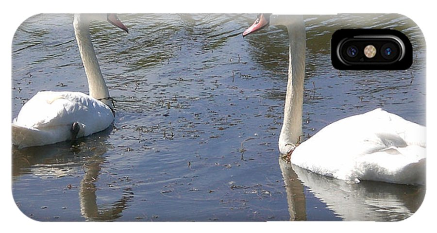 Swans IPhone X Case featuring the photograph What Are You Looking At by Sholeh Mesbah