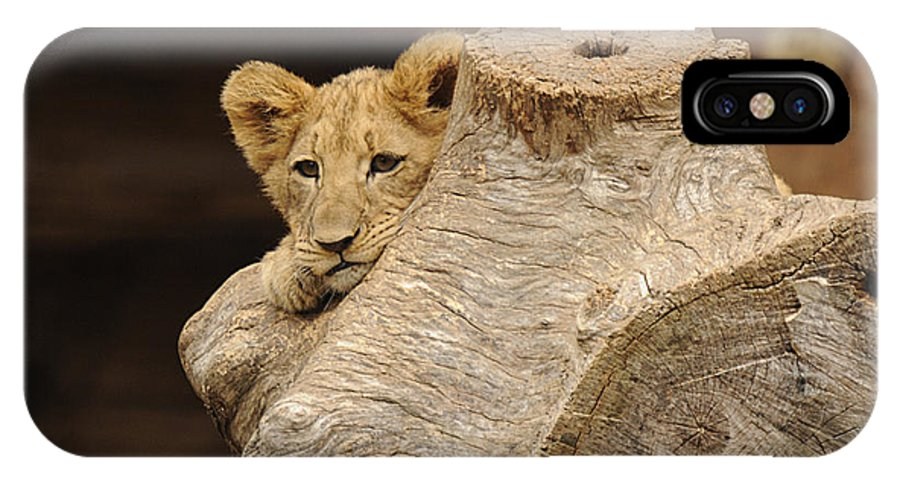Lion IPhone X Case featuring the photograph What To Do by Keith Lovejoy