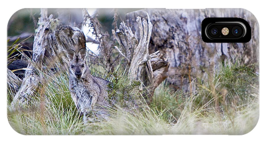 Kangaroo IPhone X / XS Case featuring the photograph Where's The Roo by Michelle Ngaire