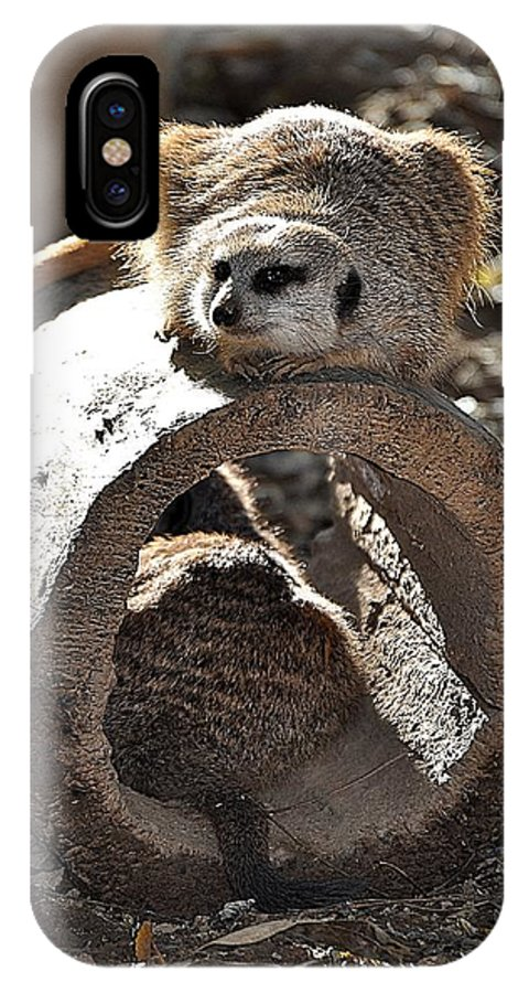 Animals IPhone X Case featuring the photograph Which Way Did He Go by Jan Amiss Photography