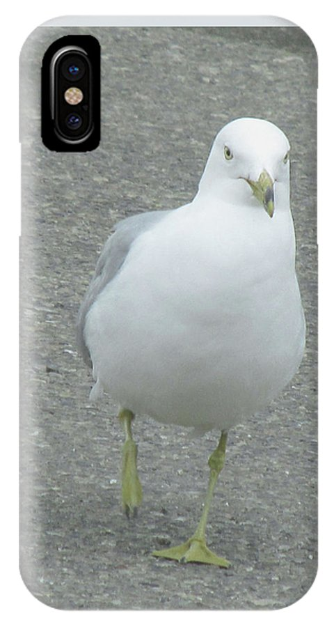White Bird IPhone X Case featuring the photograph White Bird Of Alberta by Donna Tanael