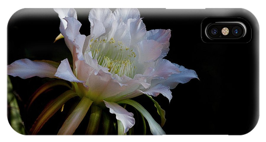 Hylocereus IPhone X Case featuring the photograph White Cactus Glory by Ruth Jolly