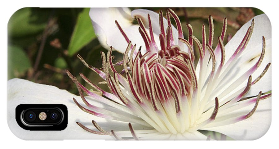 Clematis IPhone Case featuring the photograph White Clematis Henryi by Margie Wildblood