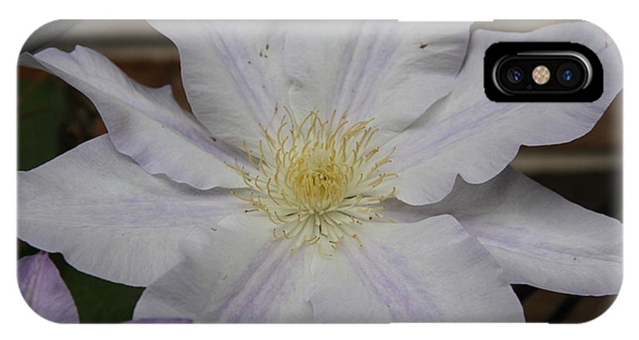 White Clematis IPhone X / XS Case featuring the photograph White Clematis by Rebecca Pavelka