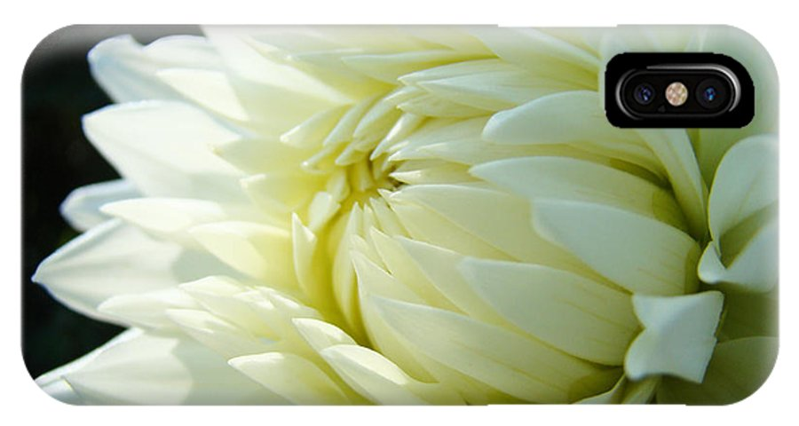Dahlia IPhone X Case featuring the photograph White Dahlia Flower Art Print Canvas Floral Dahlias Baslee Troutman by Baslee Troutman