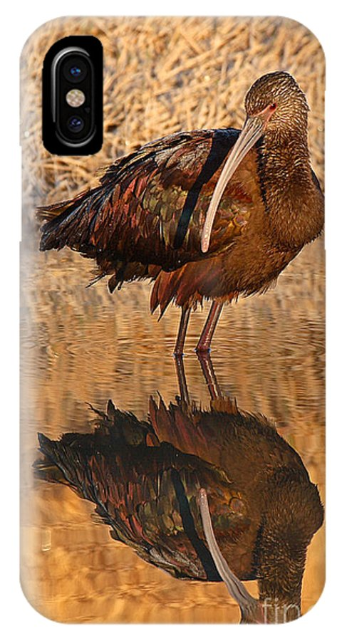Ibis IPhone X Case featuring the photograph White-faced Ibis Reflecting On Late Spring Morning by Max Allen
