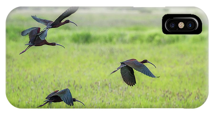 White-faced Ibis IPhone X Case featuring the photograph White-faced Ibis Rising, No. 3 by Belinda Greb