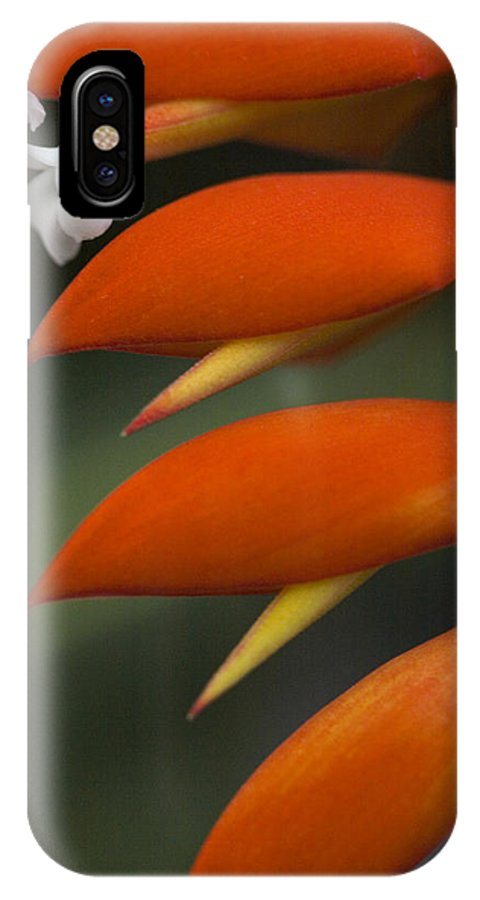 Heliconia IPhone X Case featuring the photograph White Flower And Orange by Karen Ulvestad