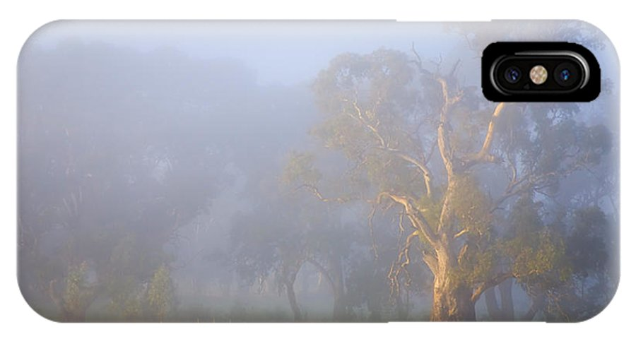 Tree IPhone X Case featuring the photograph White Gum Morning by Mike Dawson