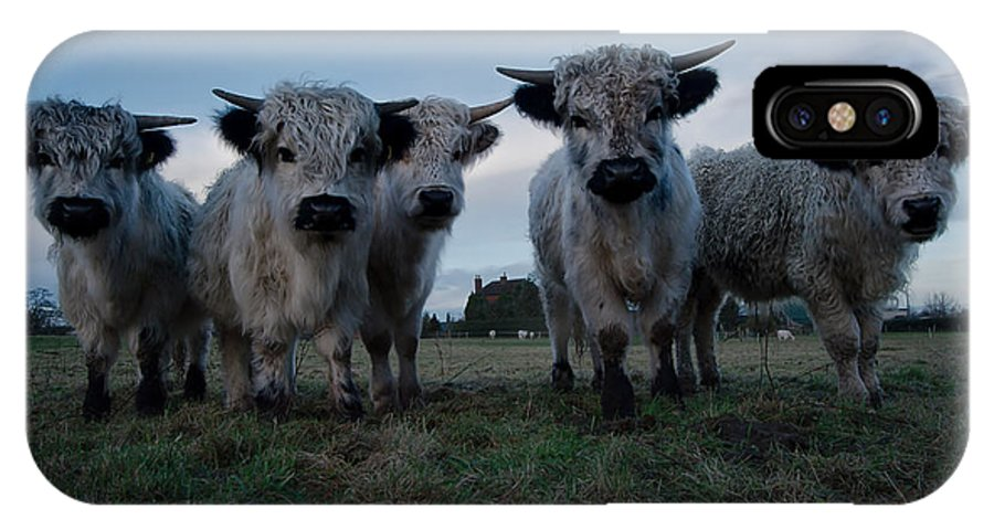 Animal IPhone X / XS Case featuring the photograph White High Park Cow Herd by Rawshutterbug