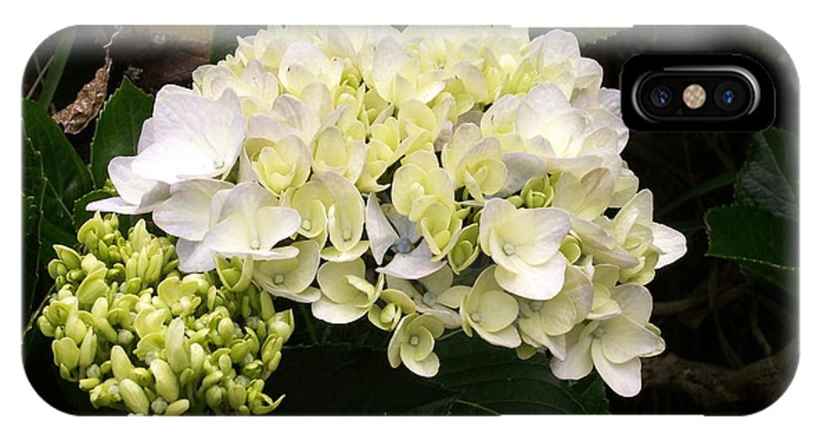 Flower IPhone Case featuring the photograph White Hydrangeas by Amy Fose