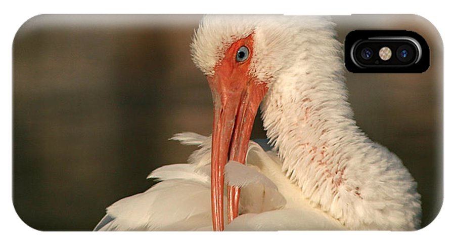 Ibis IPhone X Case featuring the photograph White Ibis Placid Preening by Max Allen