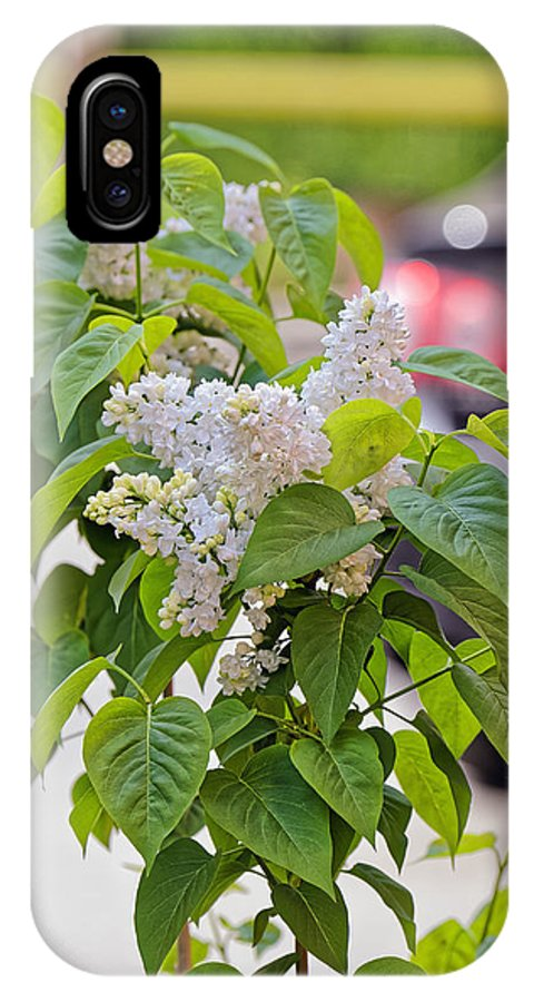 Beautiful IPhone X Case featuring the photograph White Lilac Flower by Adrian Bud