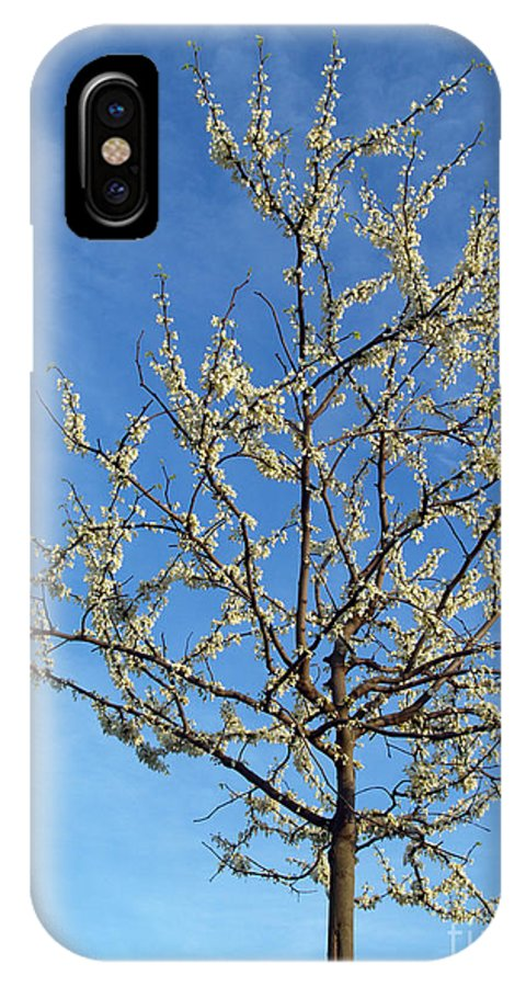 Flower IPhone Case featuring the photograph White Redbud Tree In May by Anna Lisa Yoder