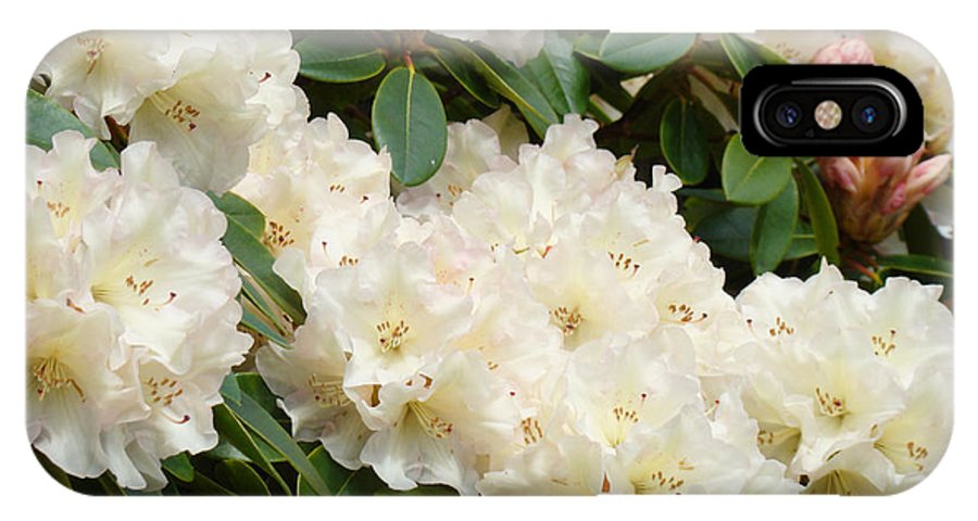 Rhodie IPhone X Case featuring the photograph White Rhodies Landscape Floral Art Prints Canvas Baslee Troutman by Baslee Troutman