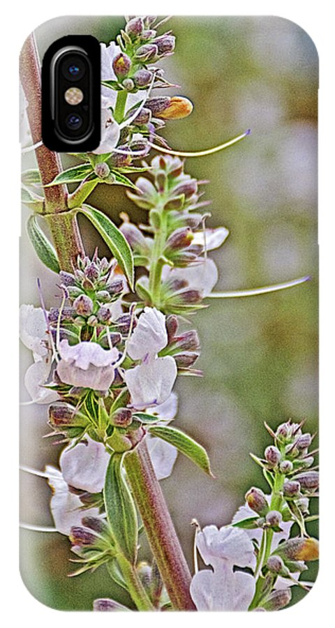 White Sage In Rancho Santa Ana Botanic Garden In Claremont IPhone X Case featuring the photograph White Sage In Rancho Santa Ana Botanic Garden In Claremont-california by Ruth Hager