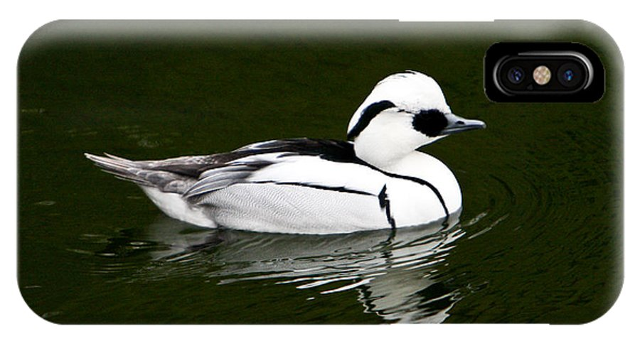 White IPhone X Case featuring the photograph White Smew Duck On Silver Pond by Douglas Barnett