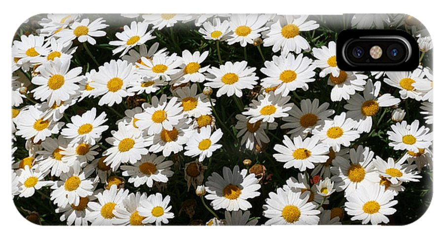 White IPhone X Case featuring the photograph White Summer Daisies by Christine Till