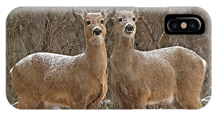 Deer IPhone X Case featuring the photograph White-tailed Deer Pair Peering Out From Snowstorm by Max Allen