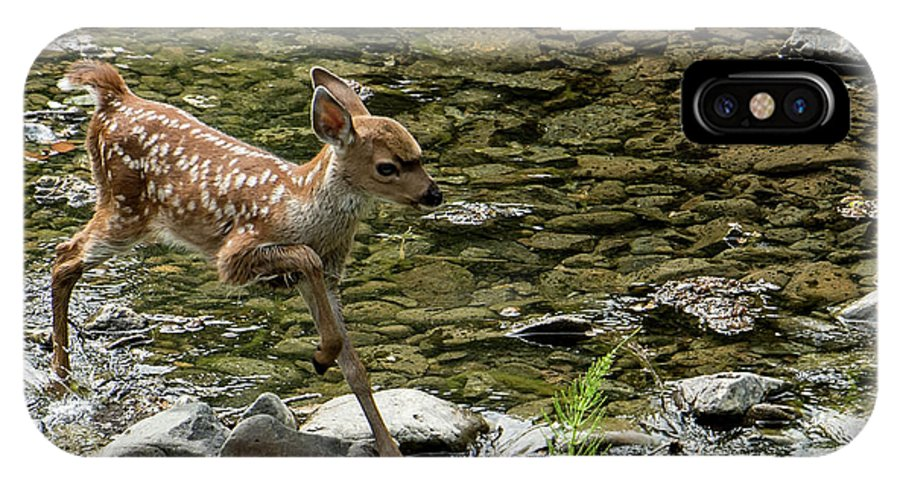 White-tailed Deer IPhone X Case featuring the photograph White-tailed Fawn At Vichy Springs Resort In Ukiah by David Oppenheimer