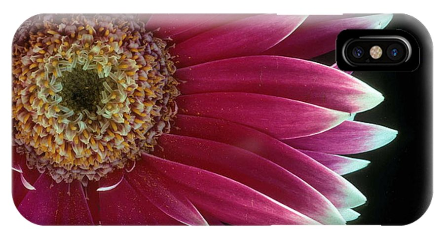 Gerber Daisy IPhone X Case featuring the photograph White Tipped Gerber by Laurie Paci