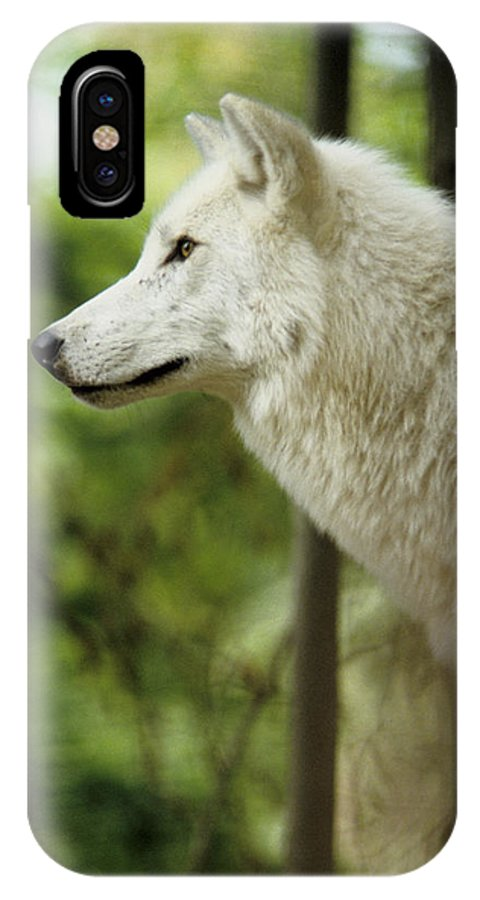White Wolf IPhone Case featuring the photograph White Wolf Stare by Steve Somerville