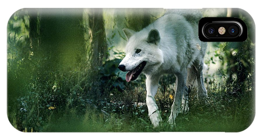 White Wolf IPhone Case featuring the photograph White Wolf Walking In Forest by Steve Somerville