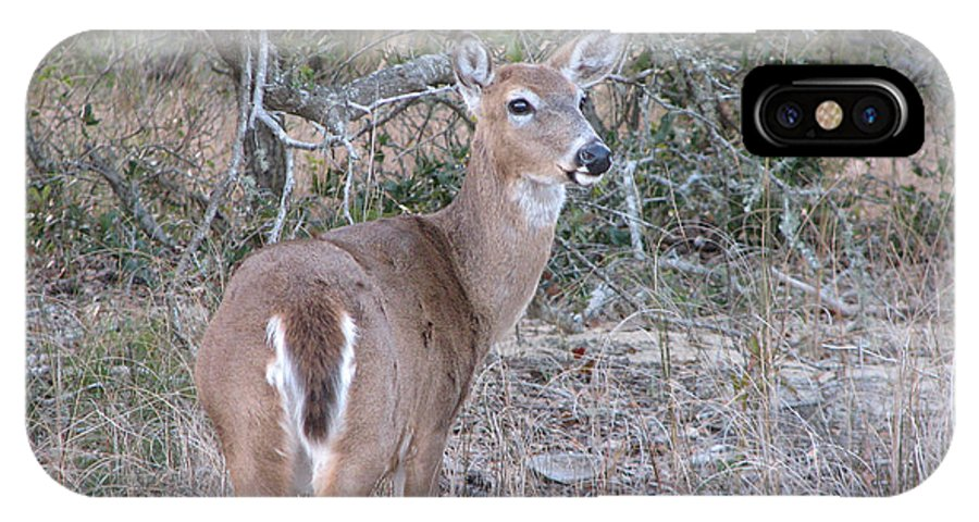 Deer IPhone X Case featuring the photograph Whitetail Deer II by Stacey May