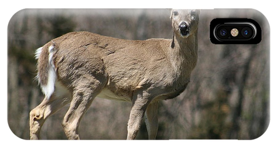 Animal IPhone X Case featuring the photograph Whitetail Profile 1 by David Dunham