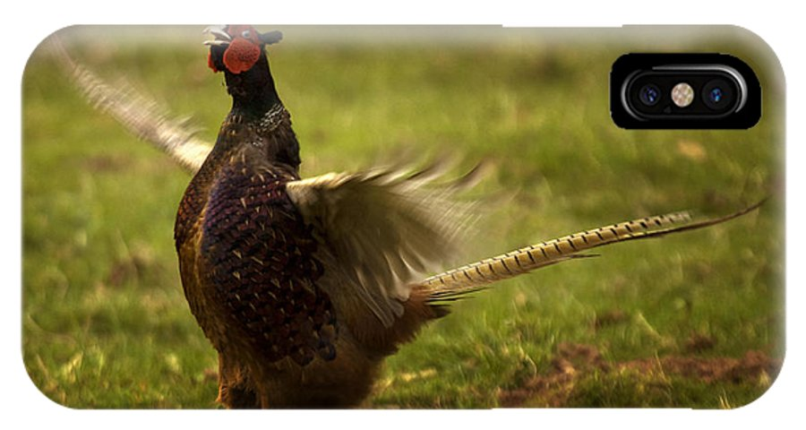 Pheasant IPhone X Case featuring the photograph Who Is The Boss by Angel Ciesniarska