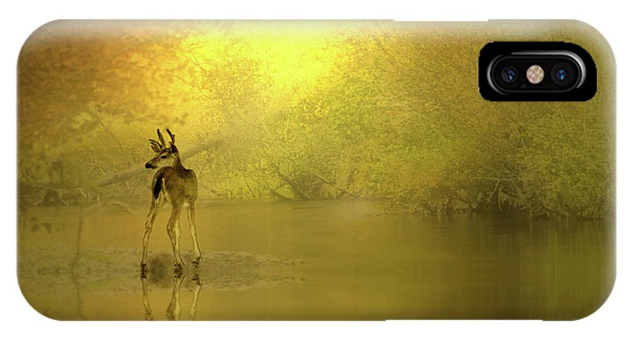 Buck IPhone X Case featuring the photograph A Silent Autumn Morning by Diane Schuster