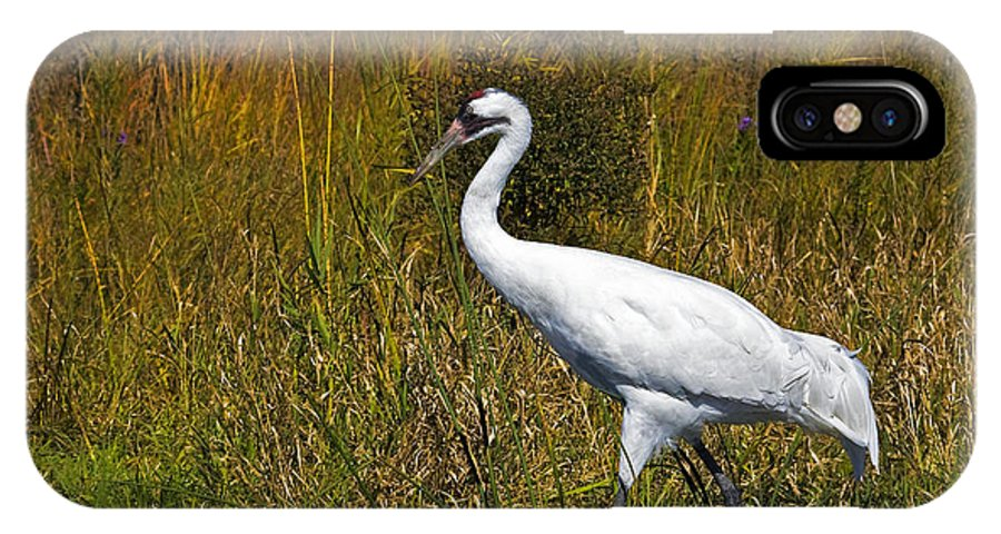 whooping Crane IPhone Case featuring the photograph Whooping Crane by Al Mueller