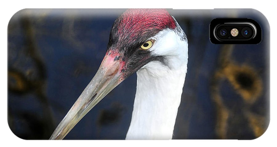Whooping Crane IPhone X Case featuring the photograph Whooping Crane Mug Shot by David Lee Thompson