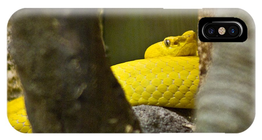 Yellow IPhone X Case featuring the photograph Wicked Snake by Douglas Barnett