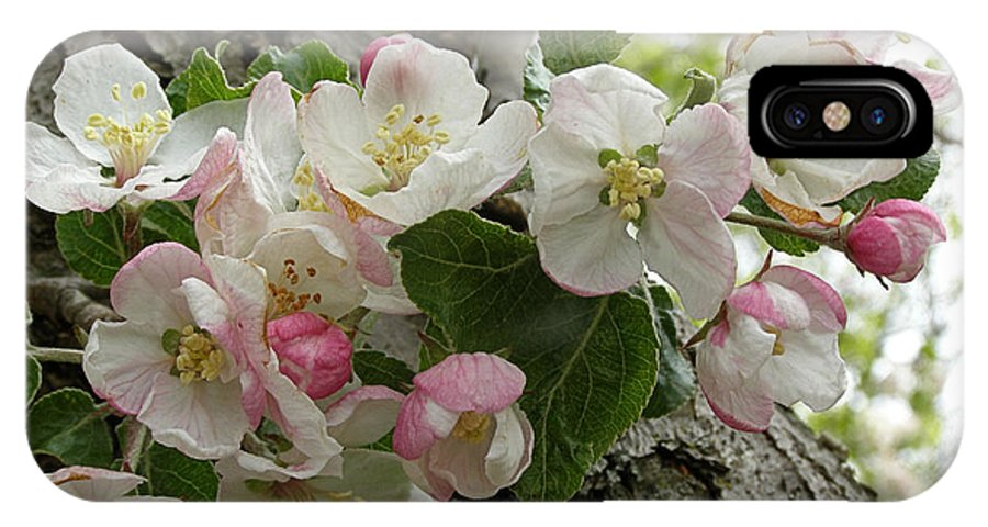 Apple Blossoms IPhone X Case featuring the photograph Wild Apple Blossoms by Angie Rea