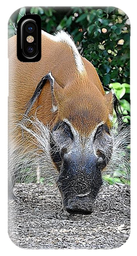 Animals IPhone X Case featuring the photograph Wild Boar by Jan Amiss Photography