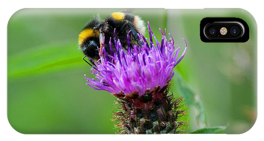Wild IPhone X Case featuring the photograph Wild Busy Worker Bumble Bee On A Thistle Flower by Chris Smith