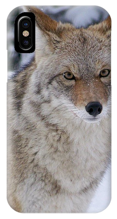 Wild IPhone X Case featuring the photograph Wild Free And Beautiful by Greg Hammond