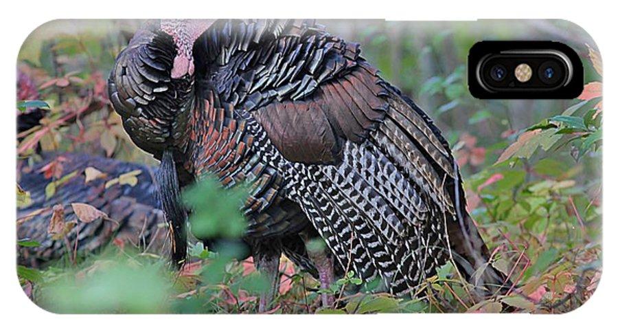 Turkey IPhone X Case featuring the photograph Wild Turkey by Linda Crockett