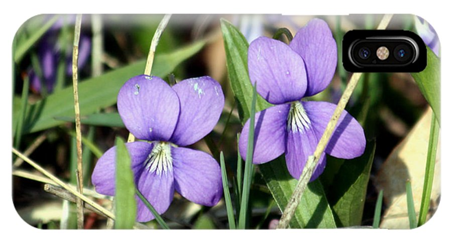 Violets IPhone X Case featuring the photograph Wild Violets by George Jones