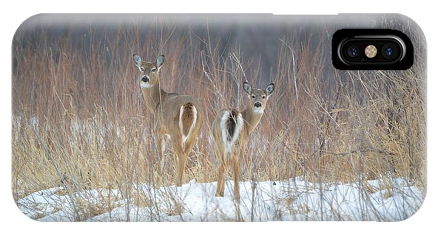 Deer IPhone X Case featuring the photograph Wild Winter by Bonfire Photography