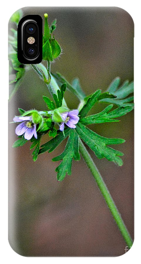 Flower IPhone X Case featuring the photograph Wildflower 2 by Karin Everhart