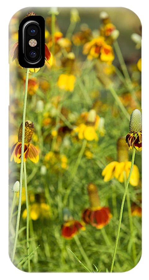 Wildflower IPhone X Case featuring the photograph Wildflowers Four by Stephen Anderson