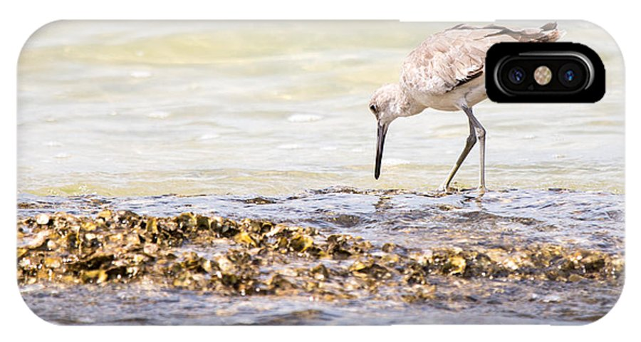 Willet IPhone X Case featuring the photograph Willet Set 3 Of 4 By Darrell Hutto by J Darrell Hutto